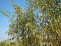43Lubao Bamboo Hub & Eco-Park Santa Catalina Pampanga 35.jpg