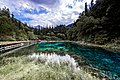 5 Flowers Lake (127556467).jpeg