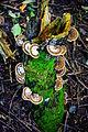 A Woodland Fungi Bouquet.JPG