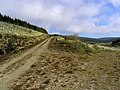 A forestry road in Eskdale - geograph.org.uk - 1582679.jpg