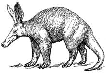 Rappresentazione grafica di un oritteropo.