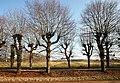 Abdij van Herkenrode, geleide lindedreef - 374666 - onroerenderfgoed.jpg