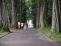 Aburi garden 2.jpg