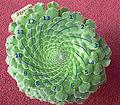 Aeonium tabuliforium 2 spirals 13.jpg