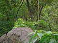 Akakara (Telugu- ఆకాకర) (28343323013).jpg