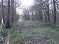 Alder Coppice Footpath - geograph.org.uk - 1082731.jpg