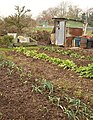 Allotment shed, Wimborne Minster - geograph.org.uk - 1701493.jpg