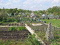 Allotments on Little Moor - geograph.org.uk - 1388650.jpg