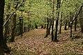 Along the Path (31014072682).jpg