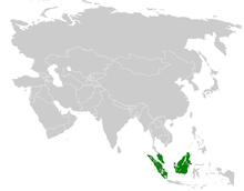 Alophoixus finschii distribution map.png