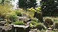Alpinpflanzen im Botanischen Garten Berlin-Dahlem.jpg
