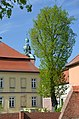 Alte Bischofsburg, Blick Richtung Marienkirche - panoramio.jpg