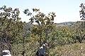 Alto Araguaia - State of Mato Grosso, Brazil - panoramio (286).jpg