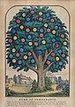 American 19th Century, Tree of Temperance, 1848, NGA 32732.jpg