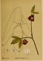 American Medicinal Plants-013-0083.png