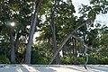 Andaman Islands, Neil, Sandy beach.jpg
