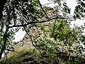 Angle sud-ouest de la muraille du Freundstein.jpg