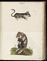 Animal drawings collected by Felix Platter, p2 - (51).jpg