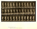Animal locomotion. Plate 18 (Boston Public Library).jpg