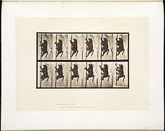 Animal locomotion. Plate 749 (Boston Public Library).jpg
