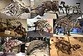 Ankylosauria Diversity.jpg