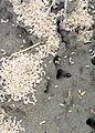 Ants oberhavel 30.06.2013 16-20-00.JPG