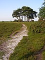 Approaching Robin Hood's Clump, Ibsley Common, New Forest - geograph.org.uk - 186536.jpg