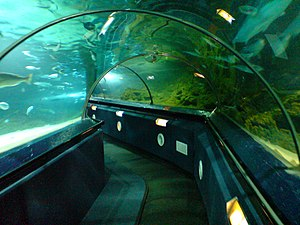 Kelly Tarlton's Sea Life Aquarium - Tunnel at the aquarium