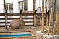 Aquatotto Gifu Capybara.jpg