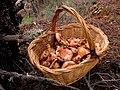 Aquest any, sí !!!! - (+ +) - La cesta de rovellons (8189100336).jpg