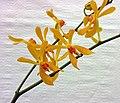 Aranthera James Storie -香港花展 Hong Kong Flower Show- (9216072676).jpg