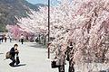 Arashiyama 2009-04-09 (3666353197).jpg