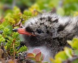 definition of beak