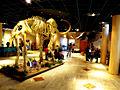 Arizona Museum of Natural History Lobby.jpg
