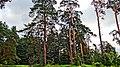 Arkhangelskoye, Moskovskaya oblast', Russia, 143420 - panoramio.jpg
