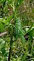 Artenvielfalt im LSG Oldhorster Moor 14.jpg