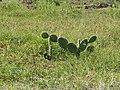 Aruba 2010 (5363692003).jpg