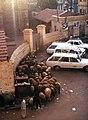 Assuan-20-Schafe vor Happi Hotel-1982-gje.jpg