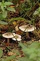 Autumn Biltse Duinen - panoramio - mgjb (2).jpg