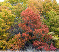 Autumn at Lake Texoma, Hagman NWR (73165403).jpg