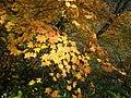 Autumn in Nasu - panoramio.jpg