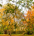 Autumn scene at Woodleigh (6 of 7).jpg