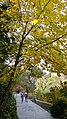 Autumn season in Butanic Garden فصل پاییز در باغ بوتانیکال تفلیس 01.jpg