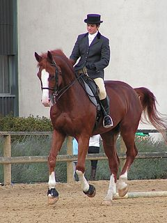 Canter and gallop Equine gait