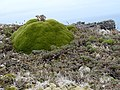 Azorelle - panoramio.jpg