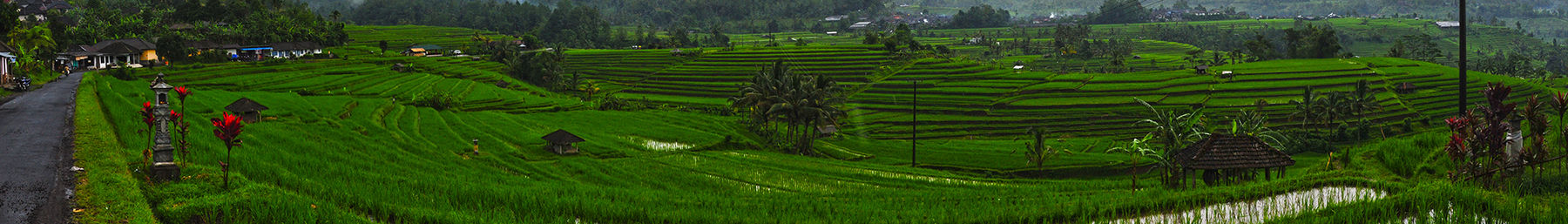 Bali banner Rice terraces.jpg