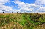 Balloërveld, natuurgebied in Drenthe 23.jpg