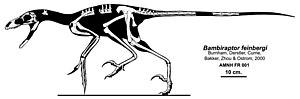 Bambiraptor - Skeletal restoration