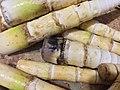 Bamboo shoots 03.jpg