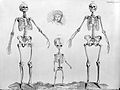 Barclay, J., The Anatomy of the bones... Wellcome L0028782.jpg